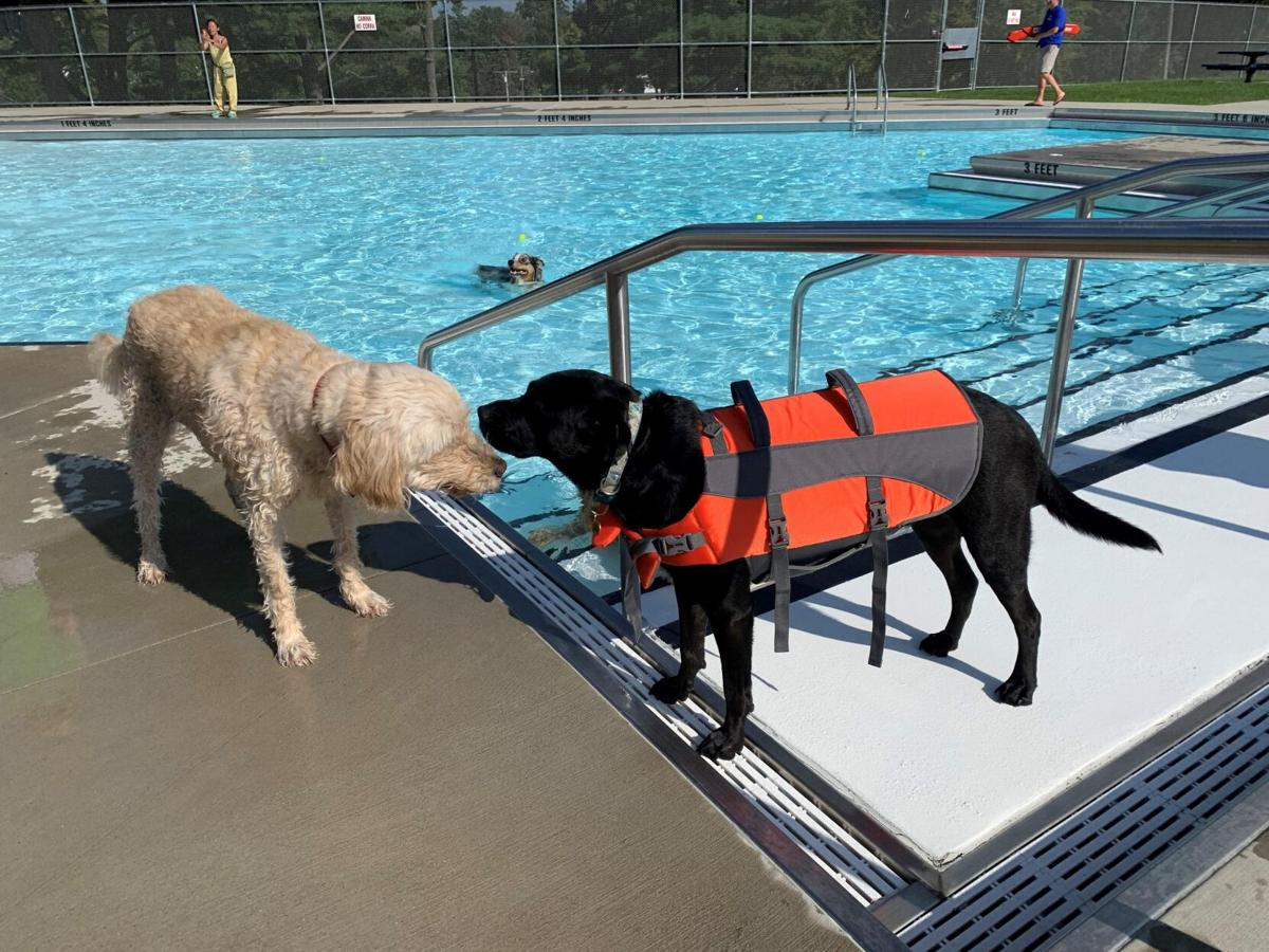 Dog park group seeks a home in West Hartford as interest grows