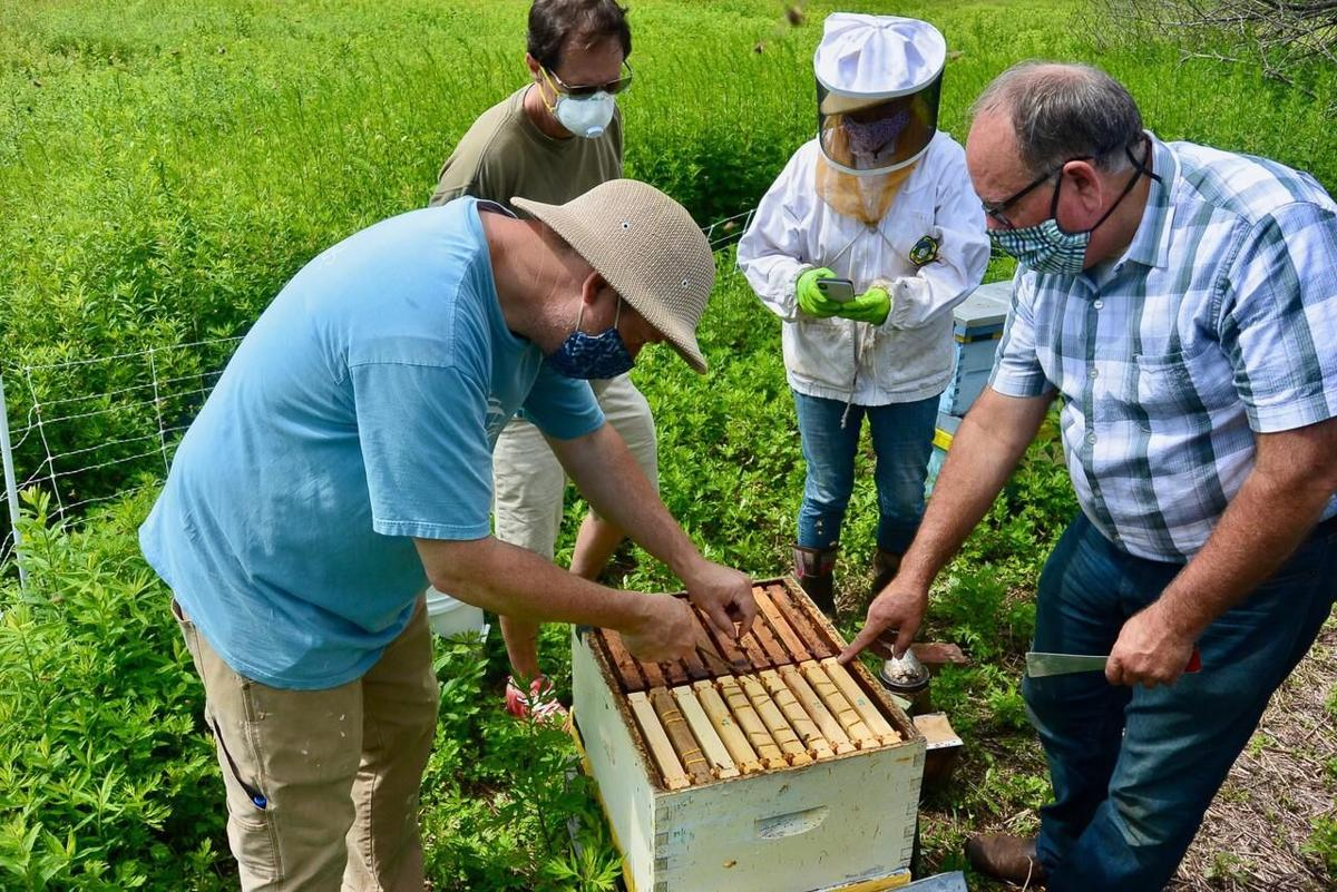 Robert Miller: How a CT beekeeper's work could strengthen colonies