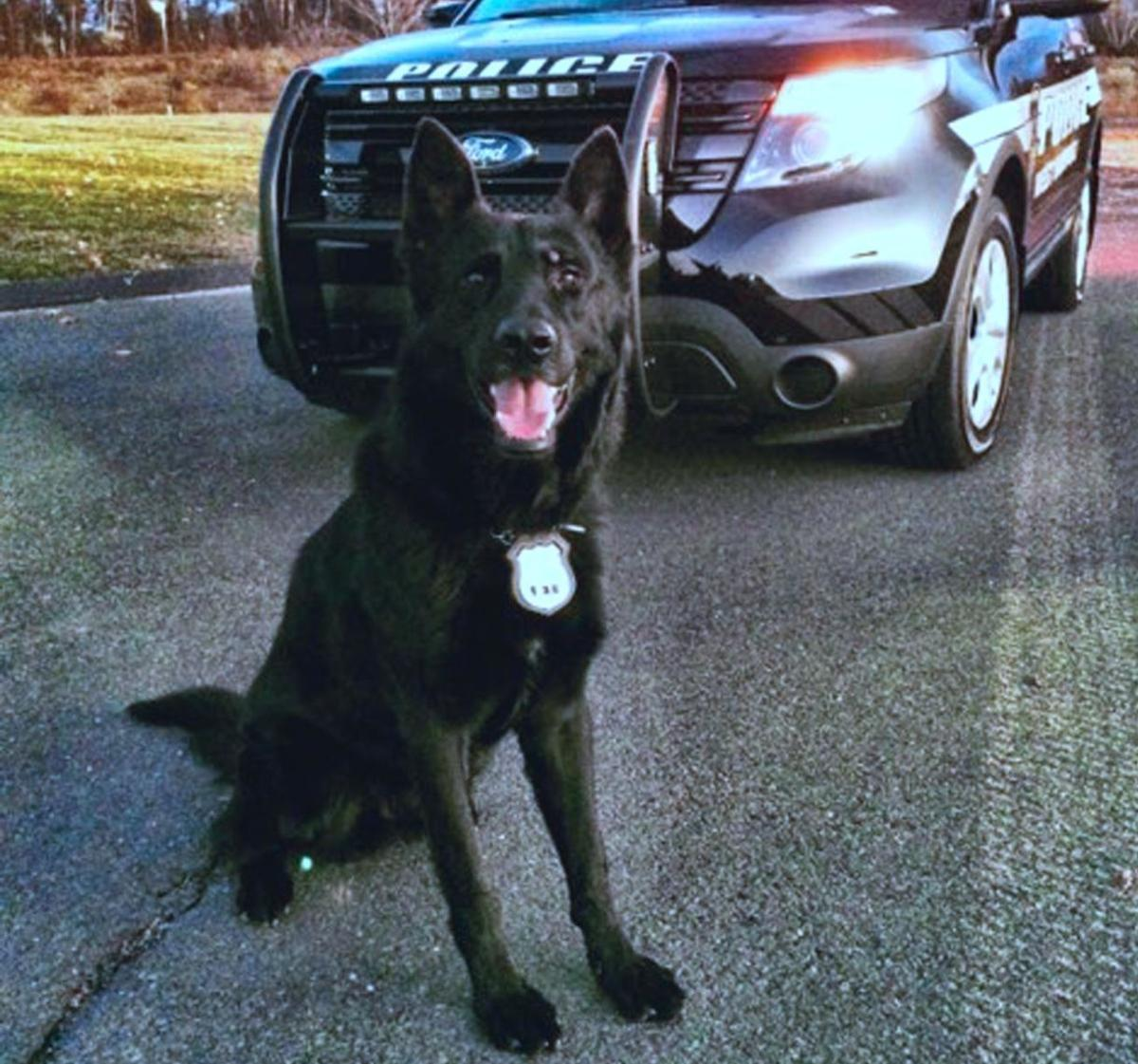 In West Hartford, Police K9 Jett dies