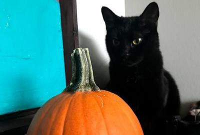 Why black cats are harder to adopt