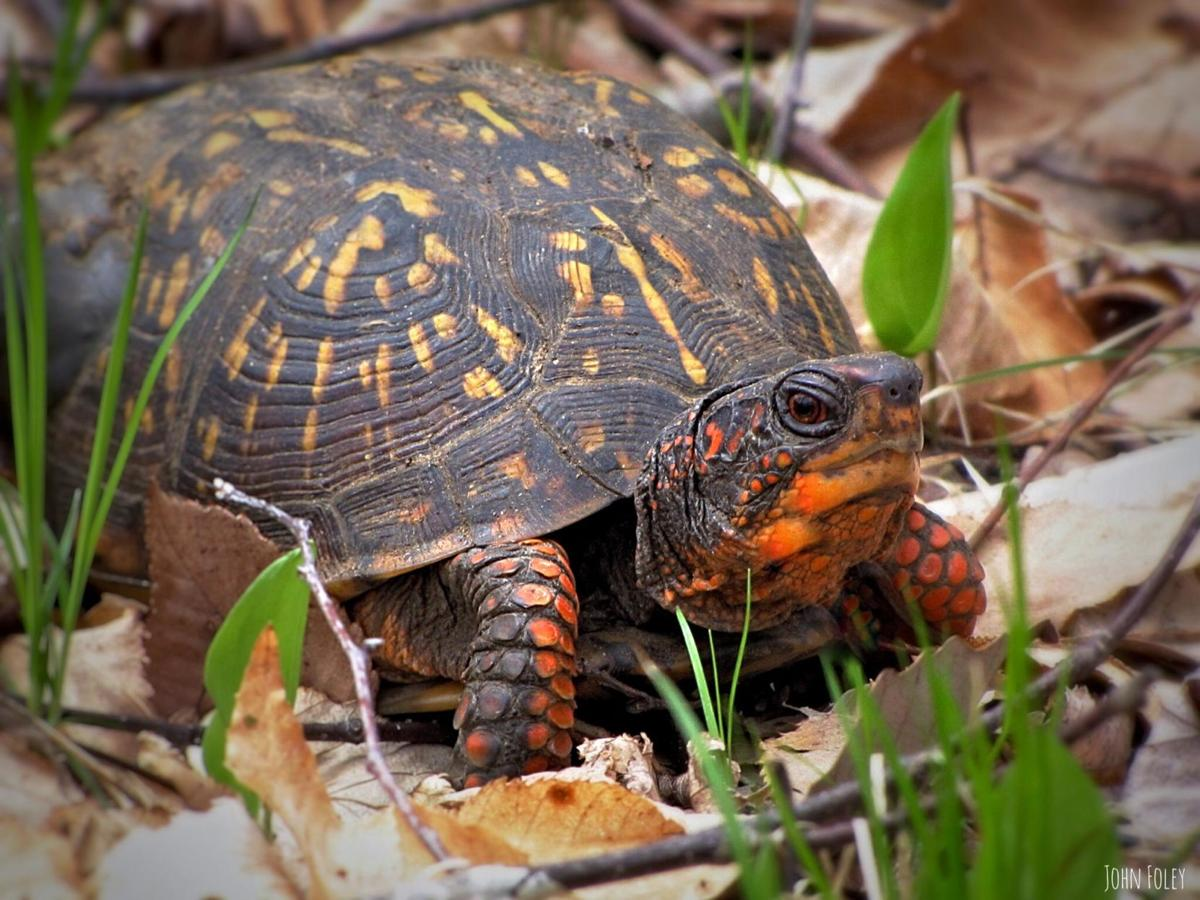 Robert Miller: Turtles are on the (slow) move again