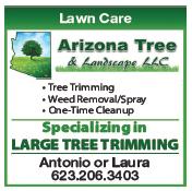 Arizona Tree Landscape