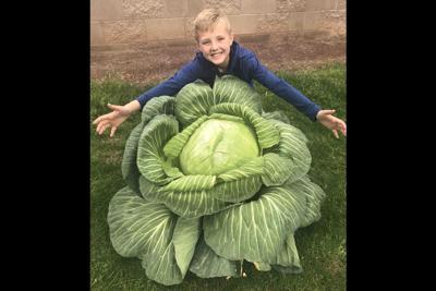 Ryder Raney Cabbage
