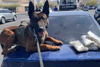 police dog drug bust