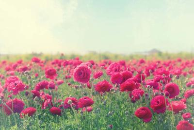 Image of beautiful pink spring flowers