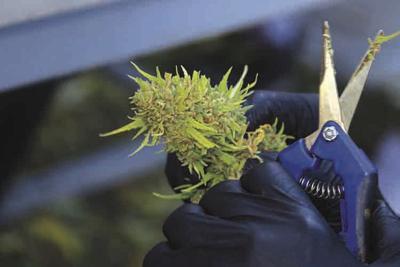 Sales of recreational marijuana