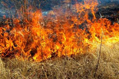 Tolleson Brush Fire