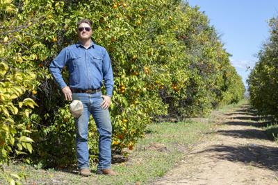 Pushed by development, costs, citrus shrinks in state economy