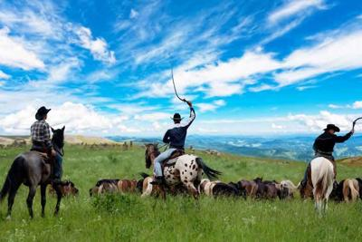 cowboys herding