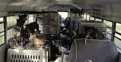 This Truck Driver Saved 64 Dogs And Cats From Hurricane Florence On His Rescue School Bus