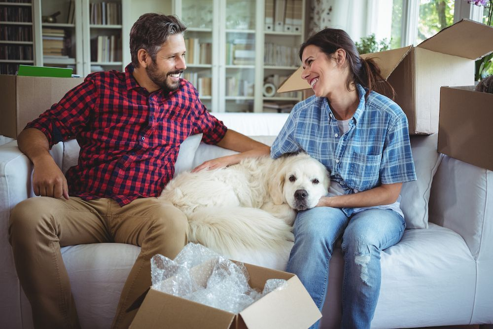 Moving with your furkid?  Be sure to plan ahead! (image)