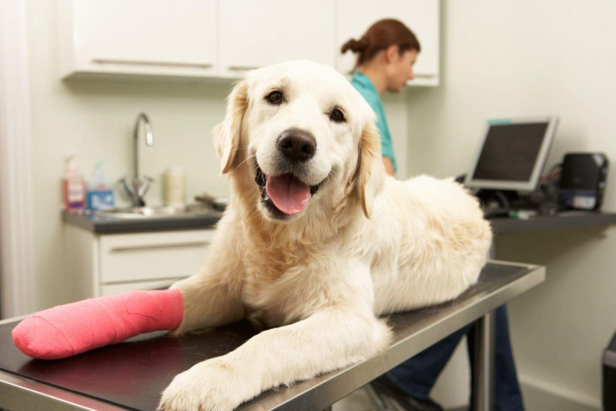 What Your Vet Wants You To Know About Giving Human Over-The-Counter Medications To Dogs