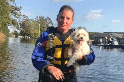 This Dog Was Rescued After Being Stranded For Nearly A Week After Hurricane Florence