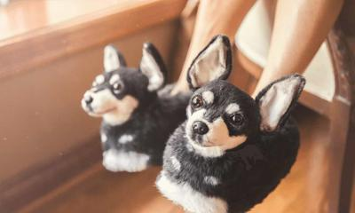 This Company Makes Slippers That Look Just Like Your Dog
