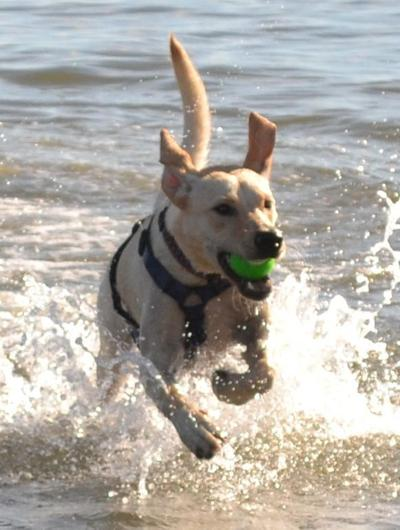 Top tips for summer beach trips with your dog (image)