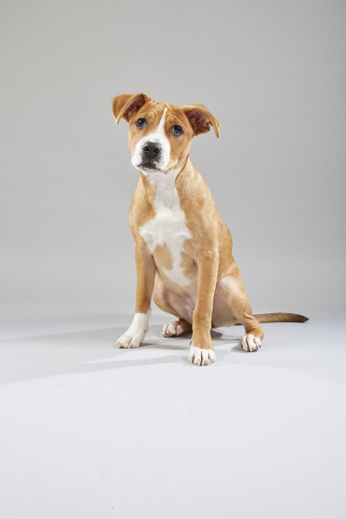 Meet the starting lineup of Puppy Bowl XV | Pets