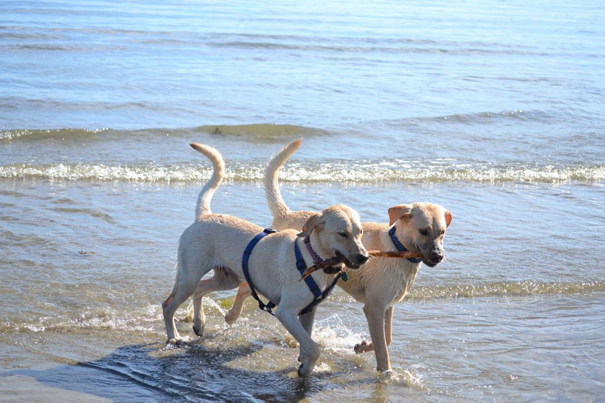 Key West, Florida: A favorite destination for pets and their people!