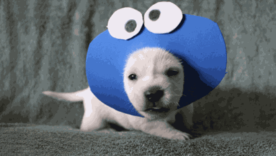These Tiny Foster Puppies Dressed In Halloween Costumes Will Make You Smile