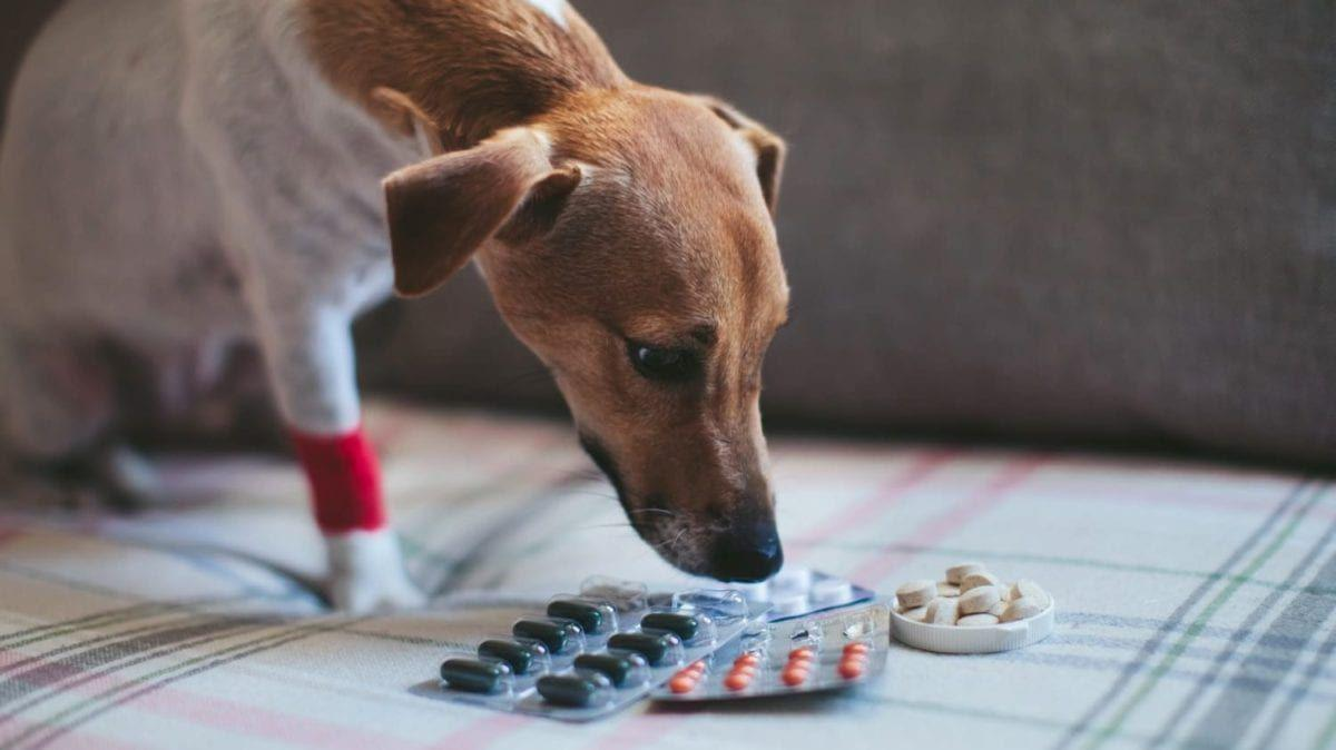 8 Important Things Vets Want You To Know About Over-the-Counter Medications And Your Dogs