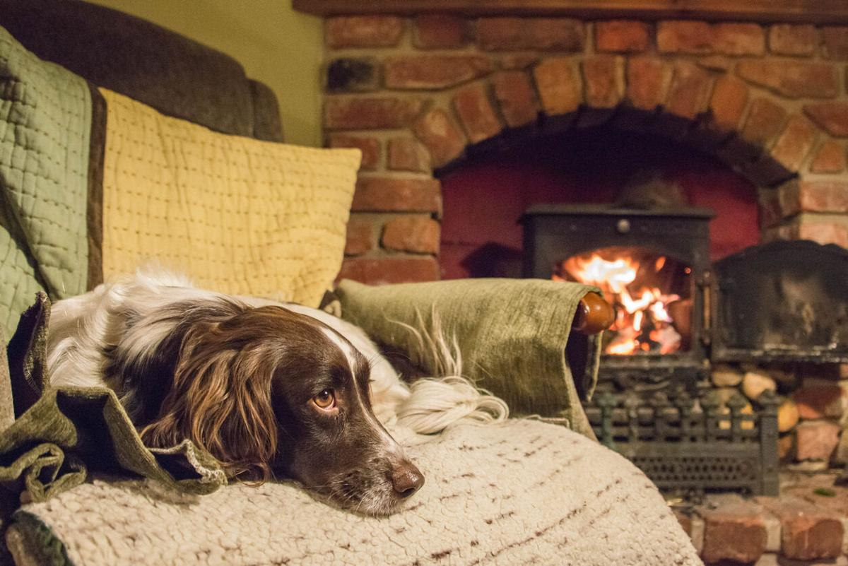 Escape to these pet-friendly retreats that won't blow your budget  - Image