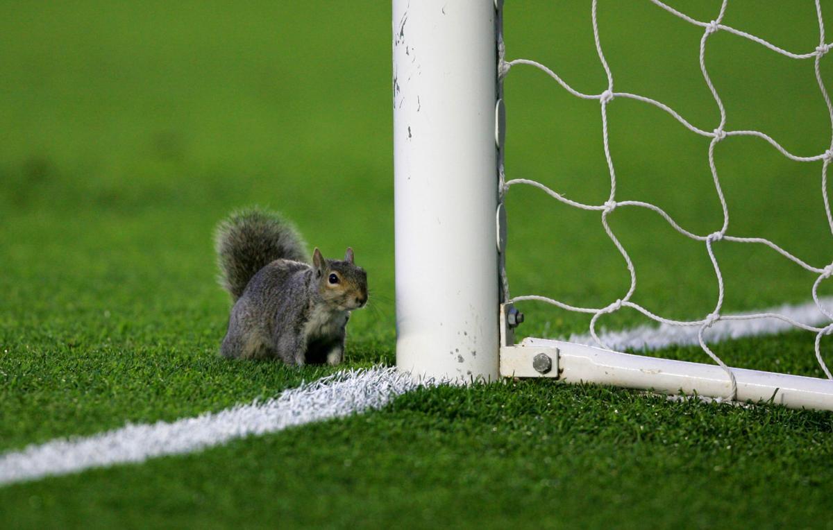 Champions League squirrel