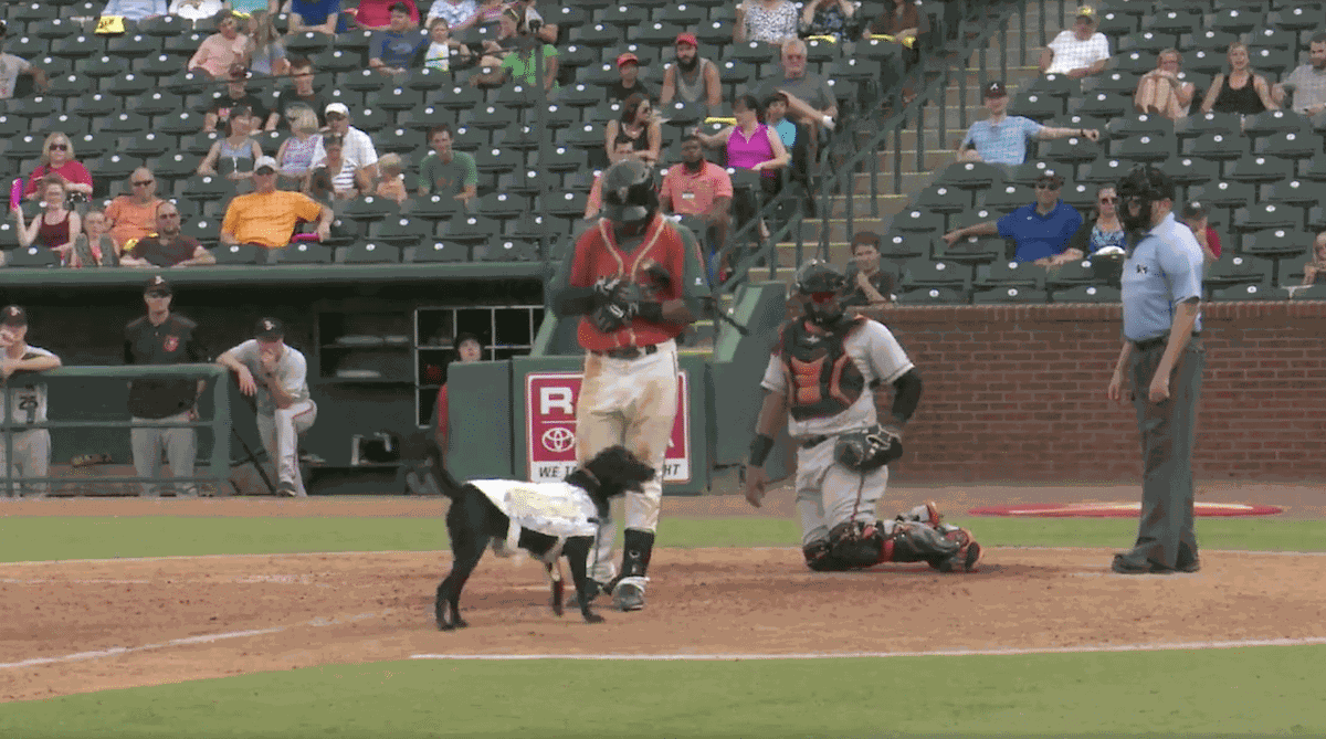 This Baseball Game's Bat Dog Went Out Too Early