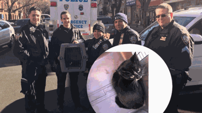 Police Officers Rescued A Freezing Kitten Trapped Under A Car