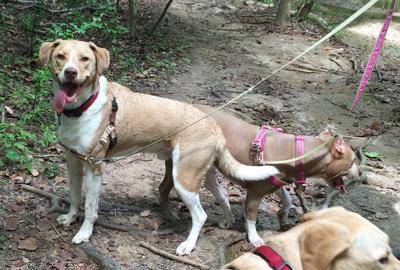 North Carolina's Piedmont Region:  The Center of Pet Friendliness! (image)