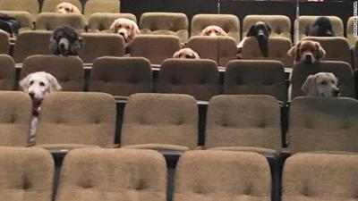 Dog audience