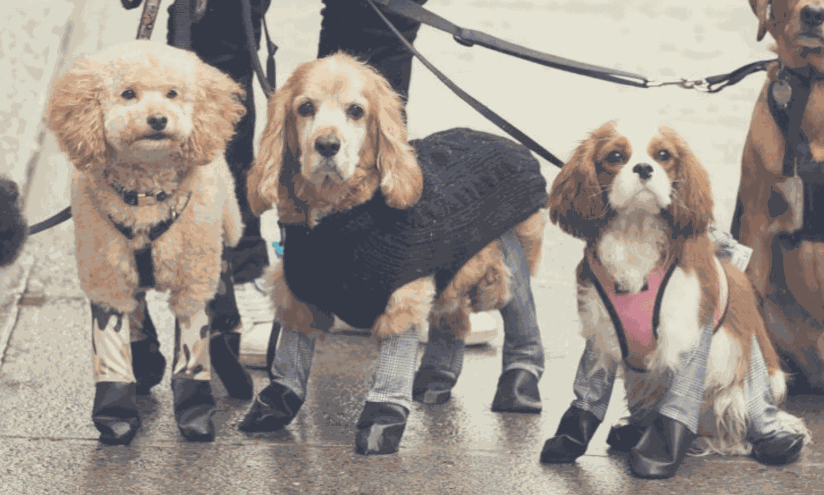 Dog Leggings Are The Newest Pet Trend For Winter