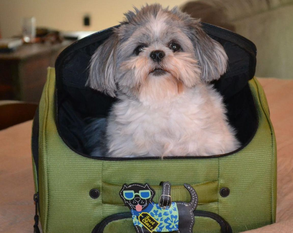 Flying the pet friendly skies: Top 10 airports for pet travel (image)