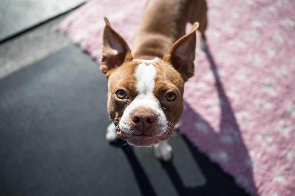 Dog breeds with the most timeless popularity