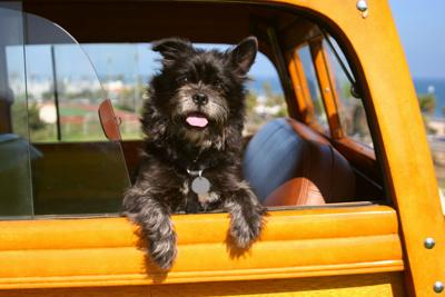 Should he stay or should he go? Deciding whether to take your pooch along on your road trip - Image