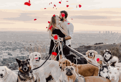 This Man Proposed With 16 Dogs And It Was Ridiculously Adorable