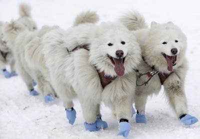 APTOPIX Czech Republic Dog Sled Race