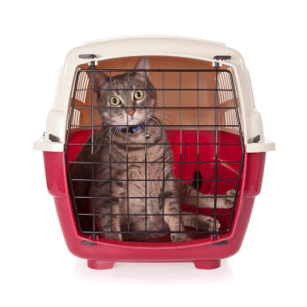 6 tips for traveling with cats in the car (image)