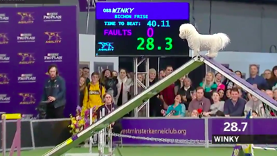 People Can't Get Enough Of This Dog Casually Running An Agility Course