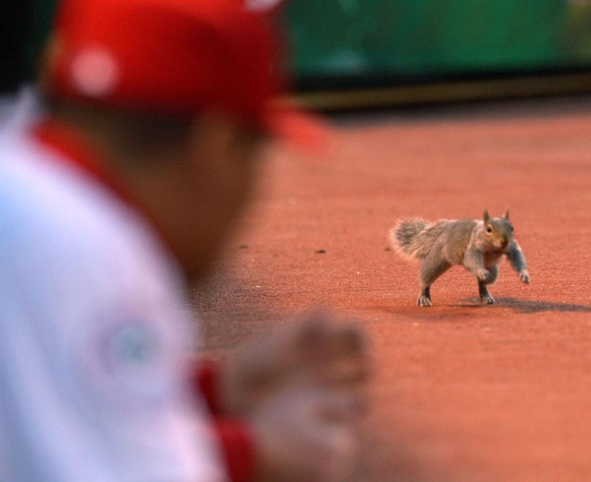 Phillies-Marlins squirrel