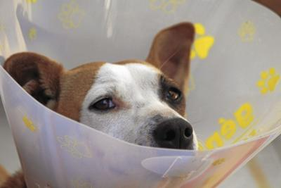 dog-1191662_1920_CMYK.jpg