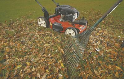 No need to rake leaves — just mow them over for a healthier lawn
