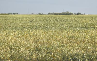 Soybeans remain a question for planted acres in North Dakota