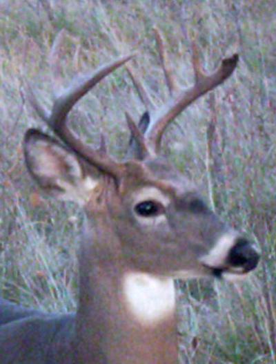 Buck10