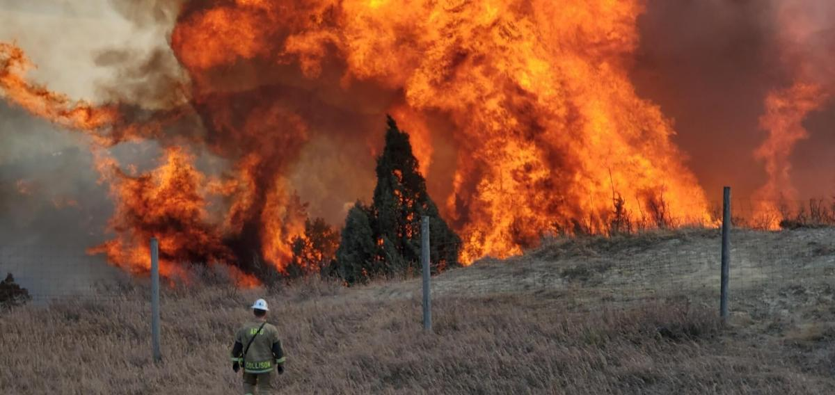 trees brush fuel big wildfire w firefighter