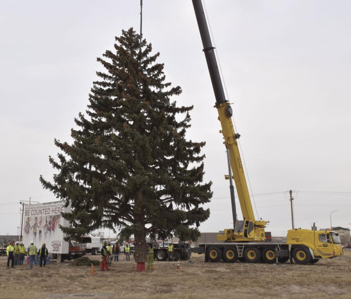 Tree-mendous installation