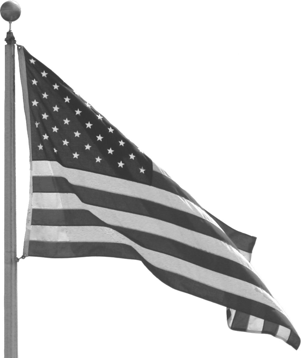 vet flag.png
