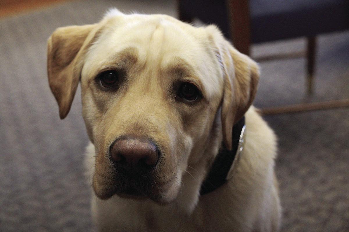 Meet Hex, North Dakota's first electronic detection dog