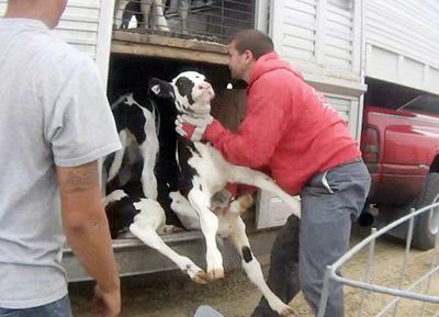 Fair Oaks Farms_WEB.jpg