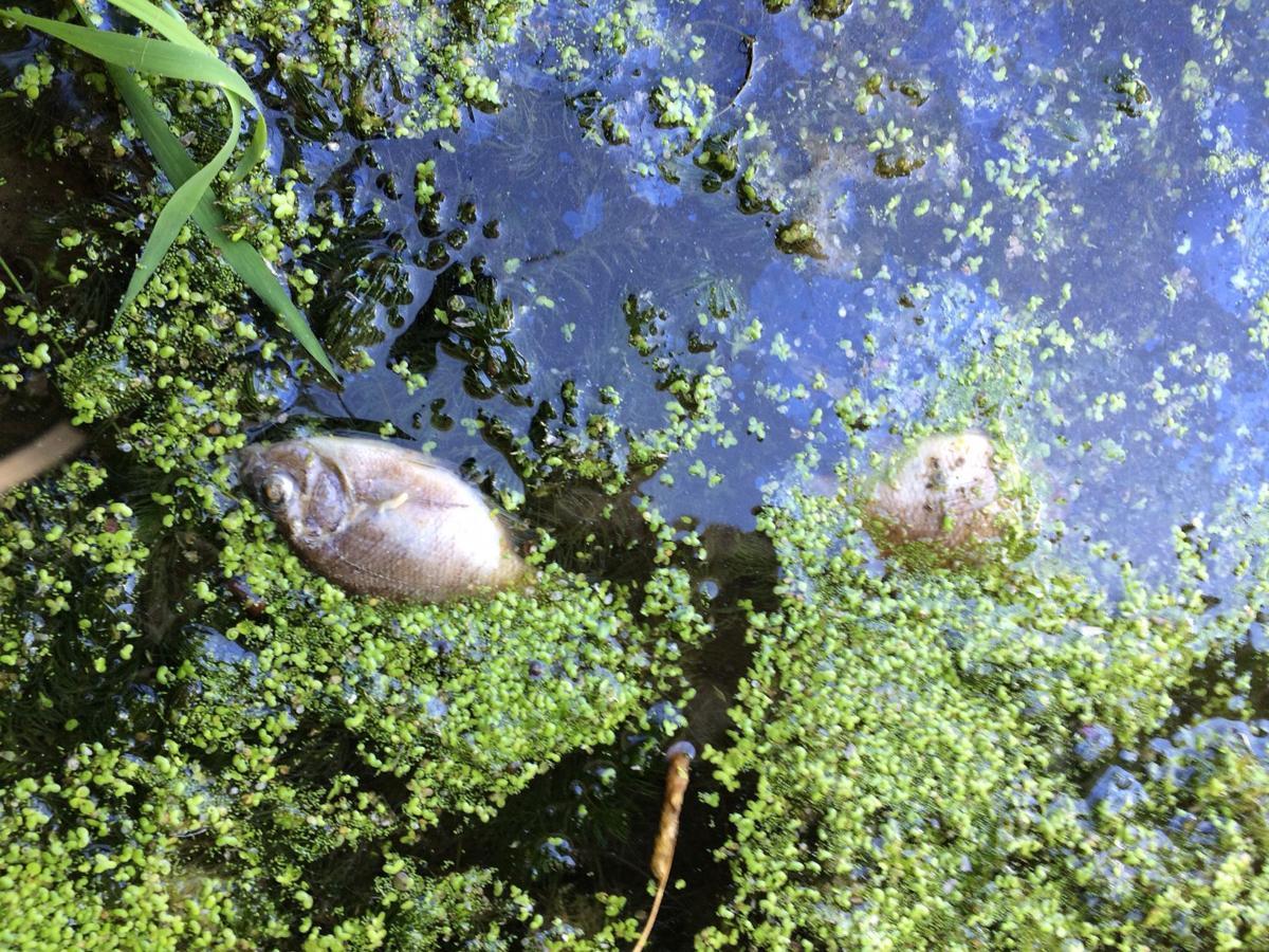 Winona lake's fish kill show why nutrients matter 01