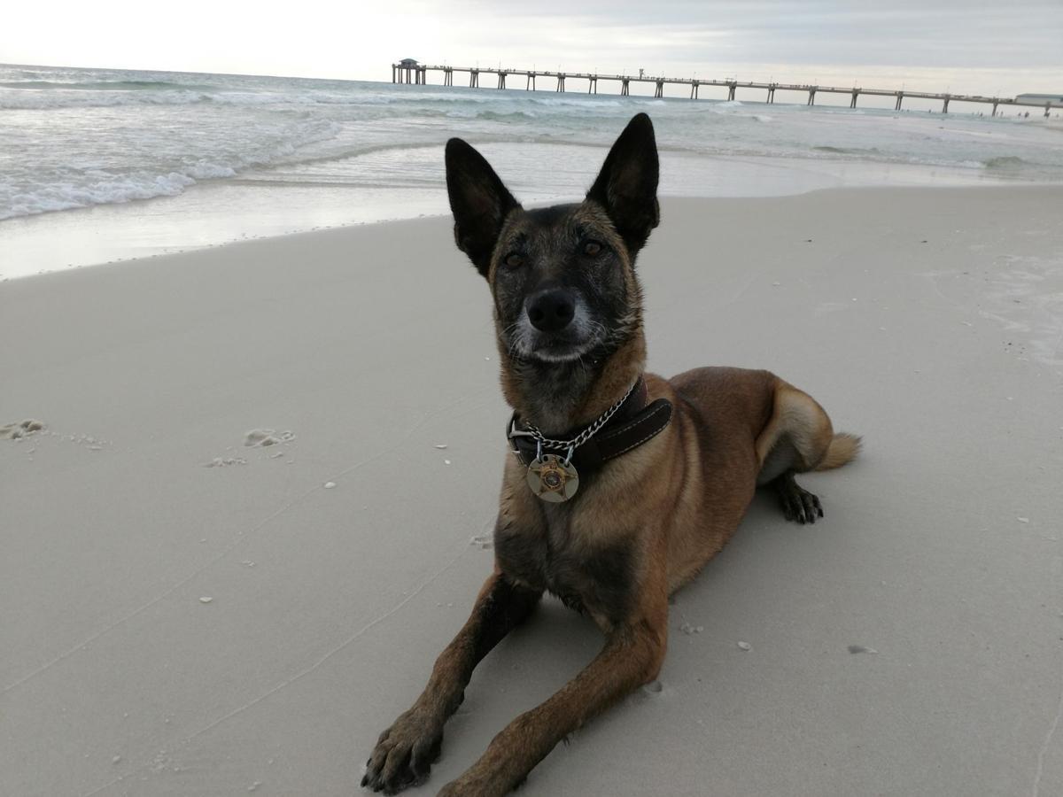 K9 Cleo in Florida