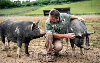 Issue no. 29: Heritage pork in Virginia